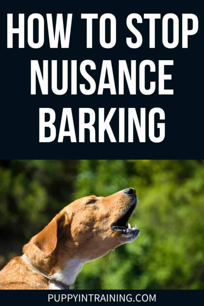 How To Stop Nuisance Barking - orange colored dog with yellow neck barking.